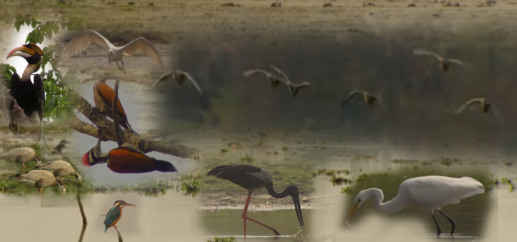 Birds of Kaziranga National Park