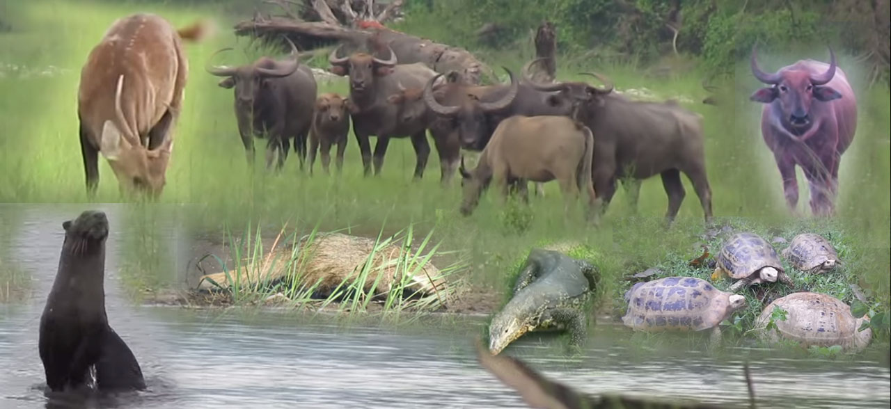animals in manas park