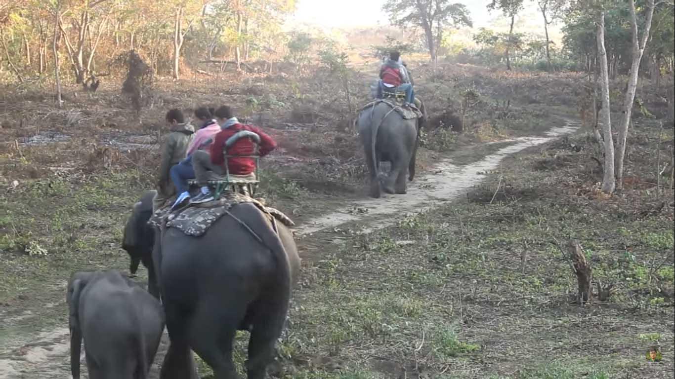 elephant safari in manas