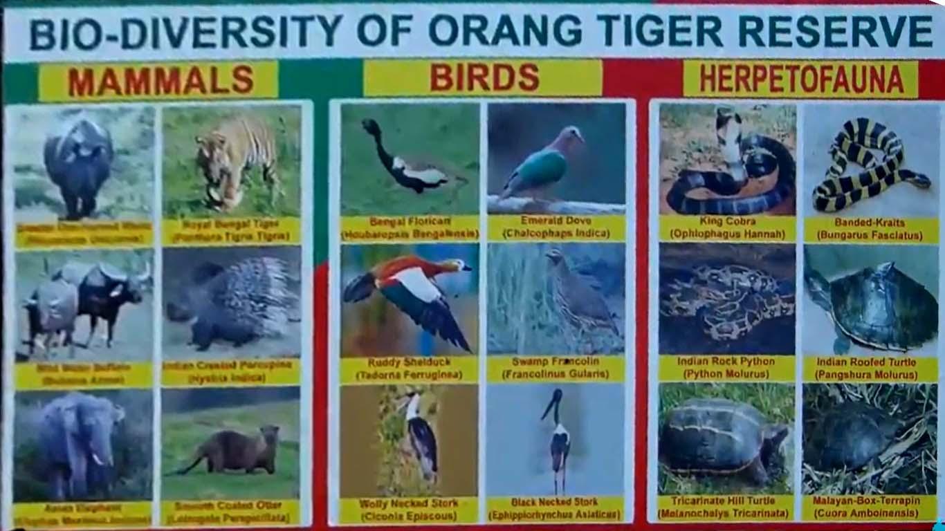 Animals Birds Herpetofauna of orang national park