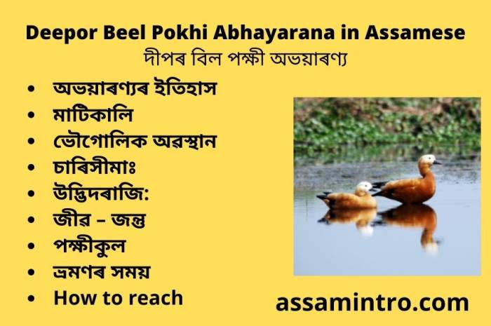 Deepor Beel Pokhi Abhayarana in Assamese। দীপৰ বিল পক্ষী অভয়াৰণ্য