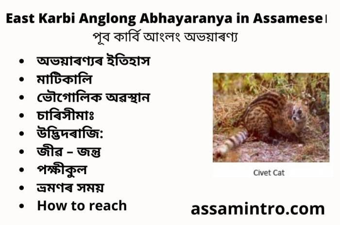 East Karbi Anglong Abhayaranya in Assamese। পূব কাৰ্বি আংলং অভয়াৰণ্য