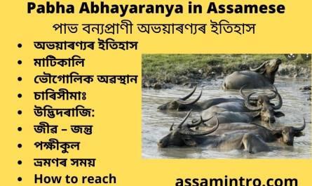 Pabha Abhayaranya in Assamese
